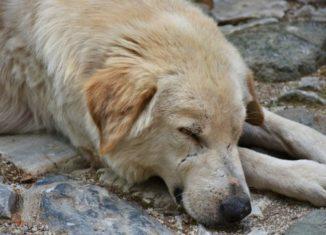 Câine vagabond care doarme