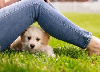 Câine și stăpânul lui în parc