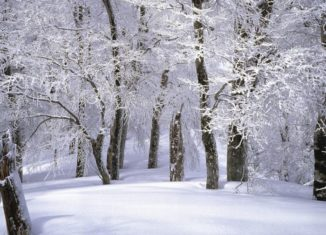 Padure peisaj de iarna