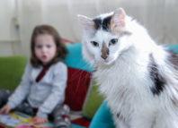 Rase de pisici potrivite pentru familiile cu copii