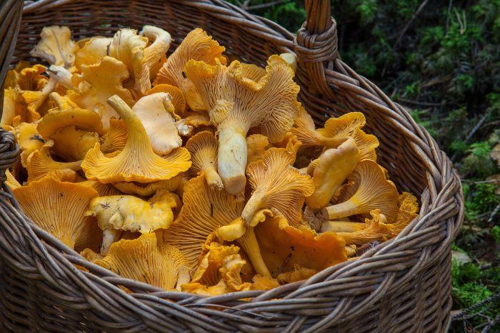 Coș cu ciuperci care conțin vitamina D