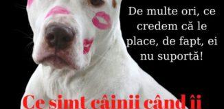 Câine alb murdar de ruj