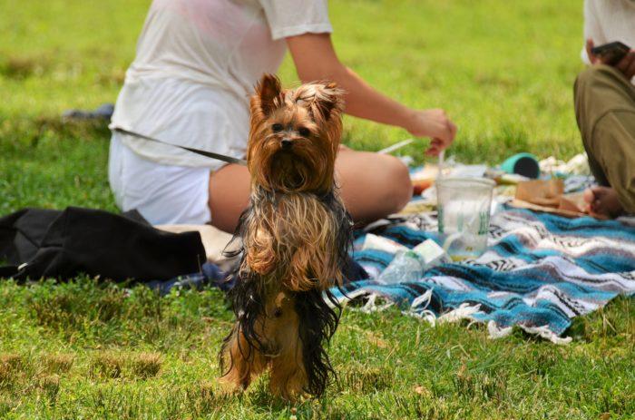 Căpușe putem aduna din iarbă când mergem cu familia la picnic
